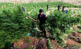 AIDA CAMA/ Shqipëria, Evropa dhe droga